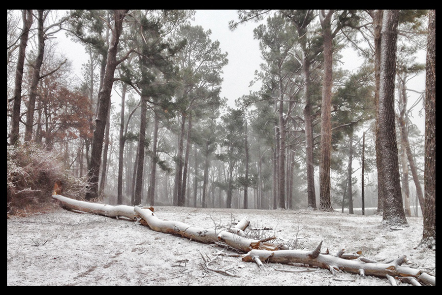 January 2, 2014 – Pine Grove in the snow