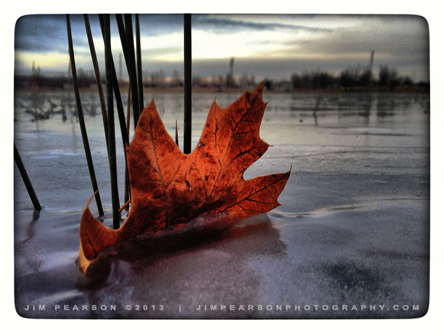 January 8, 2014 iPhone Challenge – Frozen Leaf