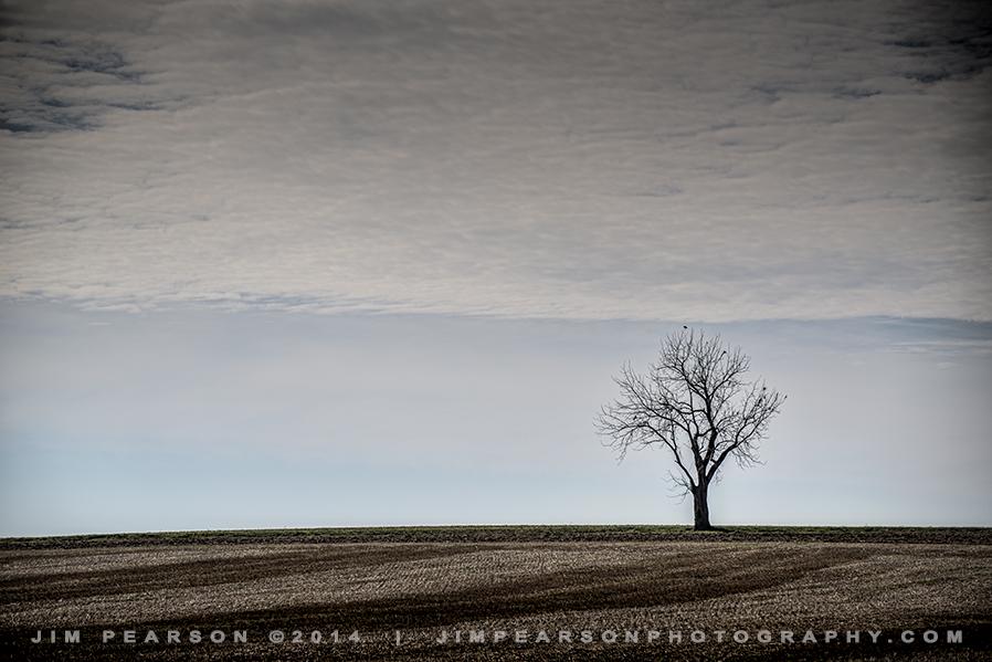 11.16.14 Lone Tree on Casky Lane, Hopkinsville, Ky